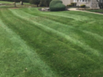 Yard mowing company in Columbus , OH, 43229