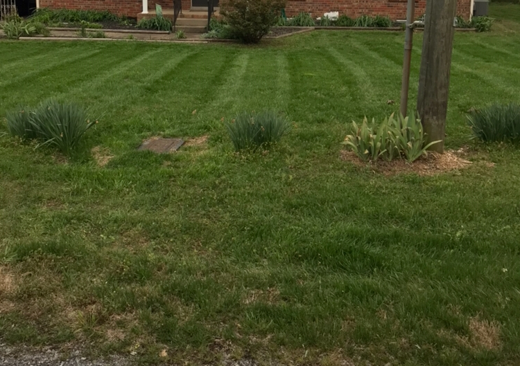 Yard mowing company in Murfreesboro , TN, 37128