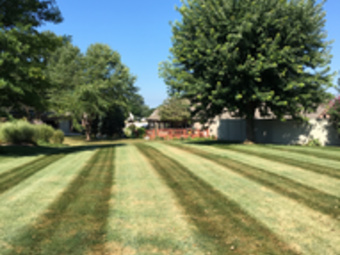 Yard mowing company in Indianapolis , IN, 46203