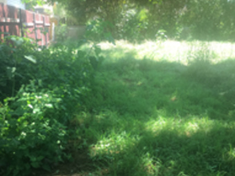 Yard mowing company in San Antonio , TX, 78228