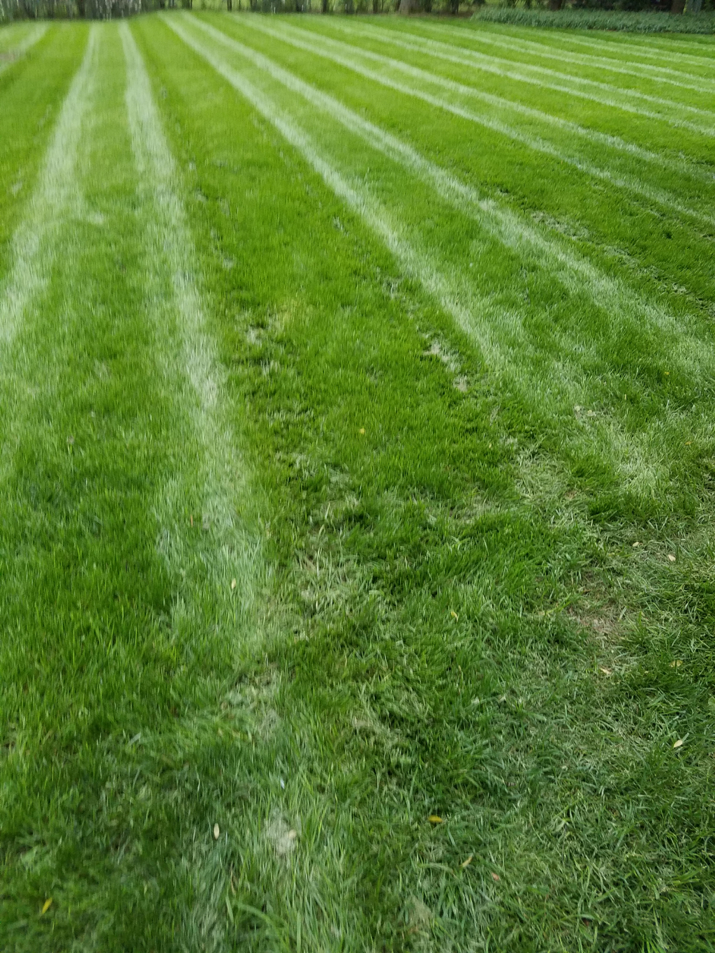 Yard mowing company in Murfreesboro , TN, 37133