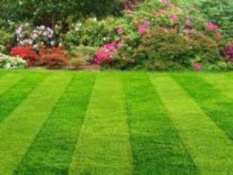 Yard mowing company in San Antonio, TX, 78245