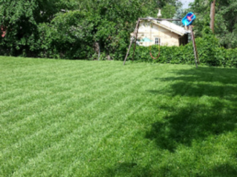 Yard mowing company in Lakewood, CO, 80214