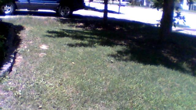 Yard mowing company in Fairburn, GA, 30213