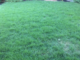 Yard mowing company in Plano, TX, 75025