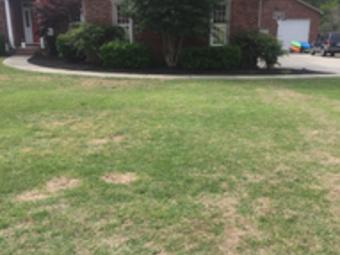 Yard mowing company in Columbia , SC, 29210