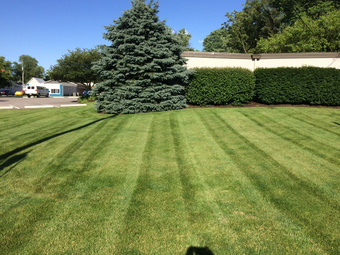 Yard mowing company in Indianapolis , IN, 46236
