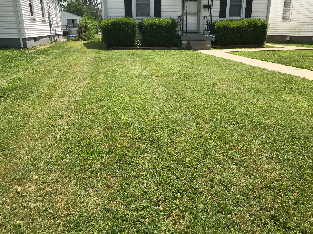 Yard mowing company in Louisville , KY, 40258