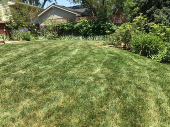 Yard mowing company in Denver, CO, 80235