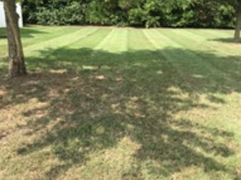 Yard mowing company in Humboldt , TN, 38343