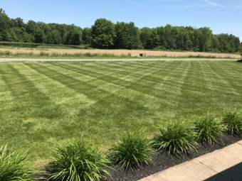 Yard mowing company in Alliance, OH, 44601