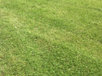 Yard mowing company in Riviera Beach, MD, 21226