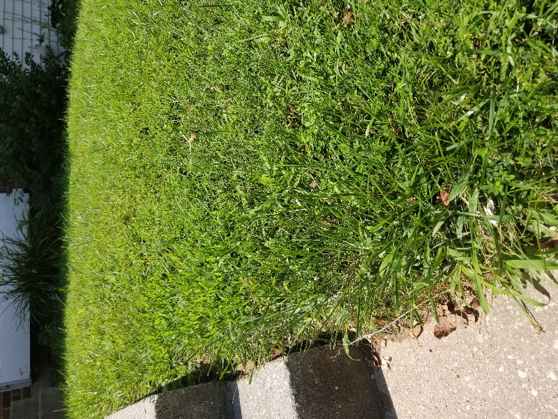 Yard mowing company in Gaithersburg, MD, 20877