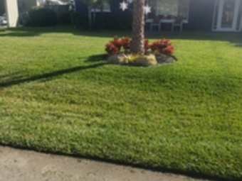 Yard mowing company in Pompano Beach, FL, 33060