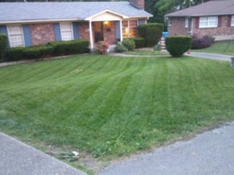 Yard mowing company in Louisville, KY, 40229