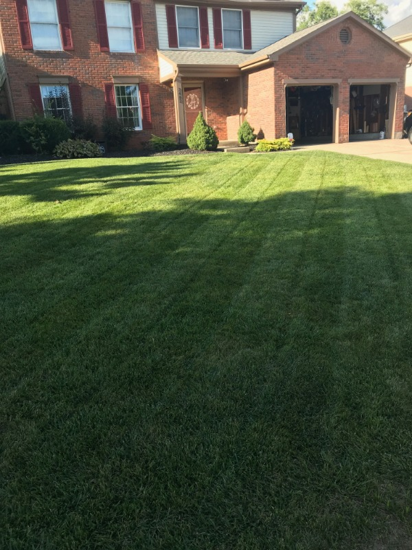 Yard mowing company in Crescent Springs, KY, 41017