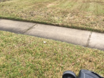 Yard mowing company in Houston, TX, 77068