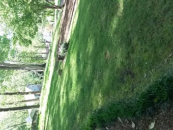 Yard mowing company in , TN, 37343