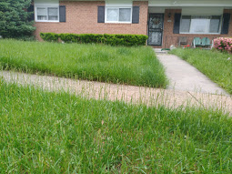 Yard mowing company in Baltimore, MD, 21208