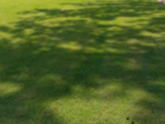 Yard mowing company in Decatur , AL, 35601