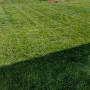 Yard mowing company in Charlotte, NC, 28269