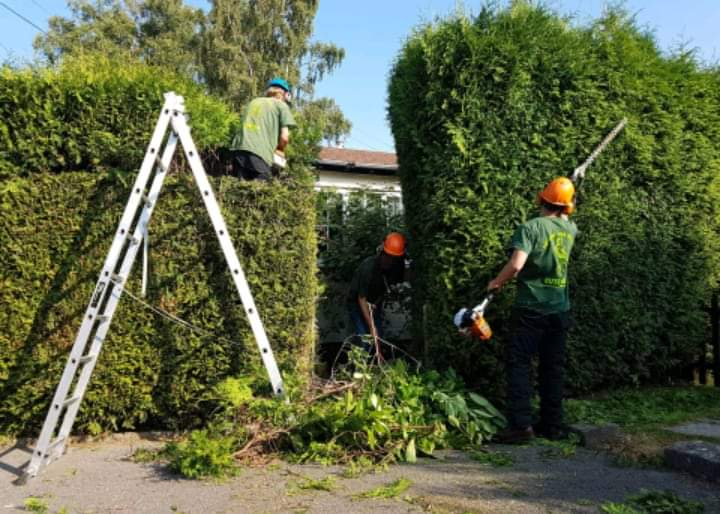 Yard mowing company in Kissimmee, FL, 34759