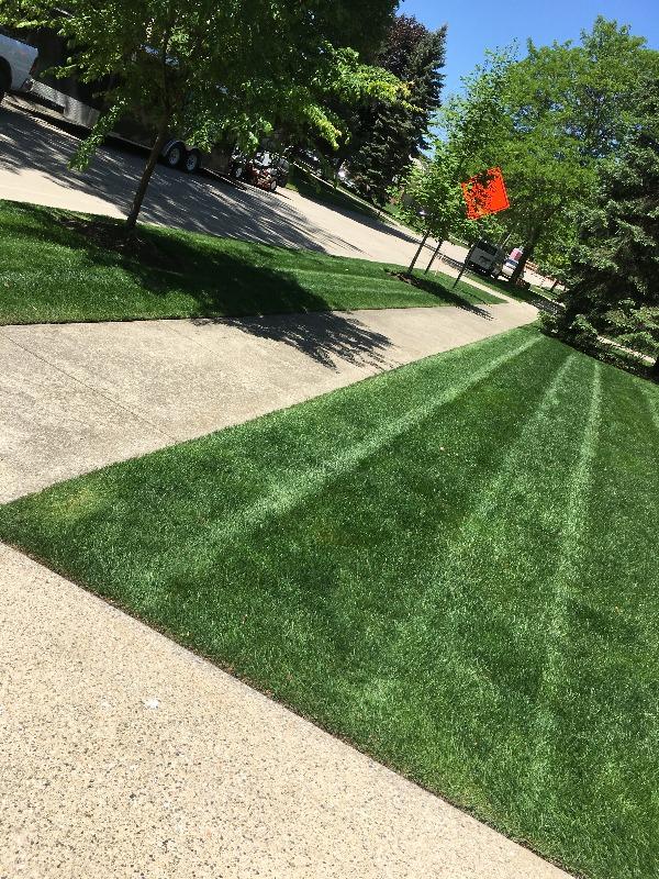 Yard mowing company in Warren, MI, 48091