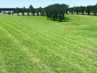 Yard mowing company in Seabrook, TX, 77586