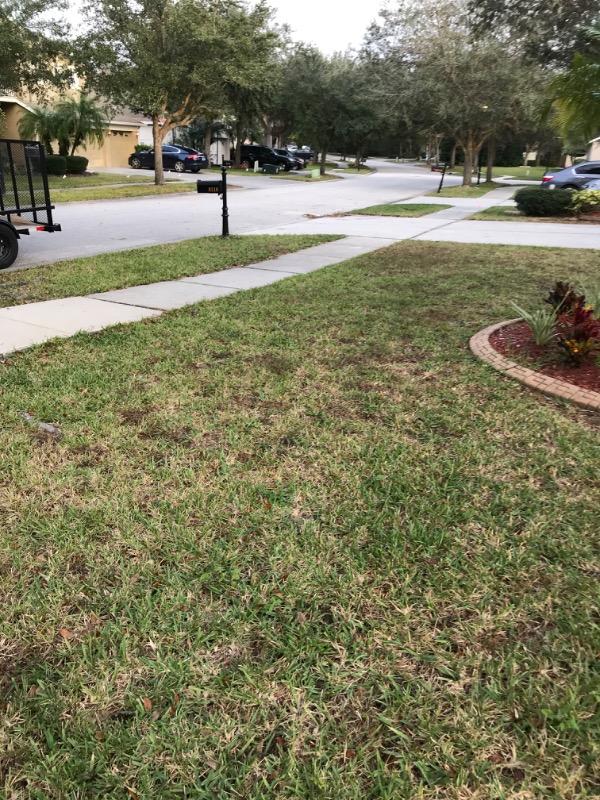 Yard mowing company in Wesley Chapel, FL, 33544
