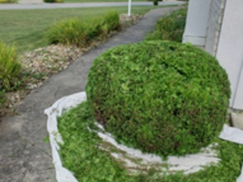 Yard mowing company in Youngstown, OH, 44504