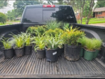 Yard mowing company in Mesquite, TX, 75149