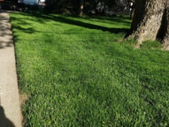 Yard mowing company in Council Bluffs, IA, 51501