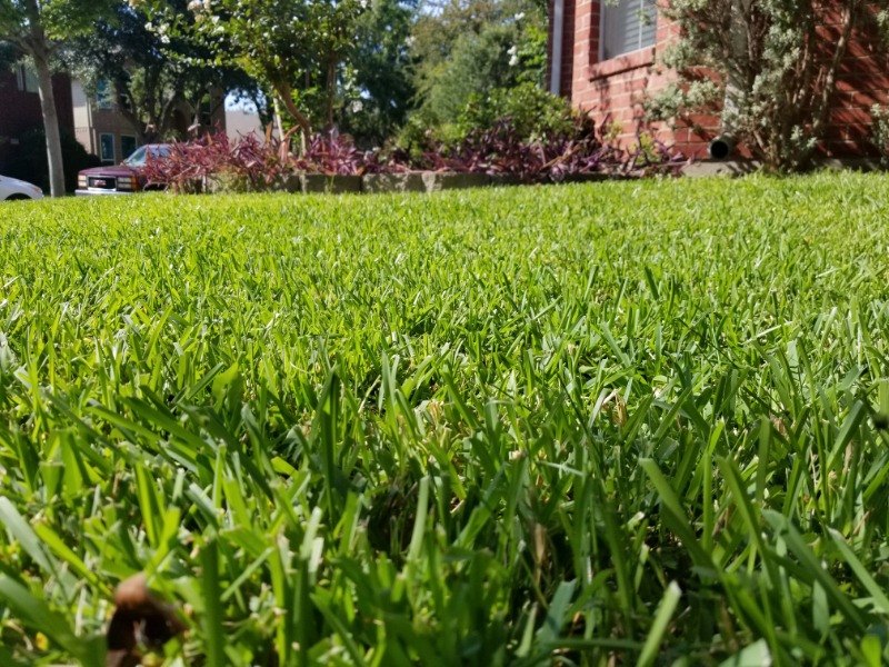Yard mowing company in The Colony, TX, 75056