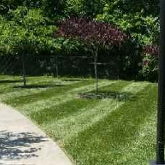 Yard mowing company in Clarksville, TN, 37043