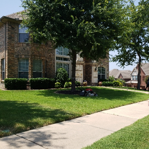 Yard mowing company in Plano, TX, 75074