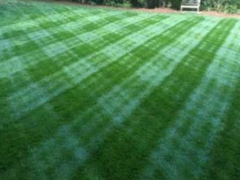 Yard mowing company in Maple Grove, MN, 55369