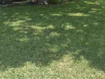 Yard mowing company in Crowley, TX, 76036
