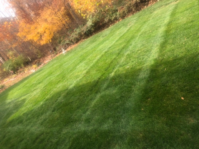 Yard mowing company in Indianapolis, IN, 46236