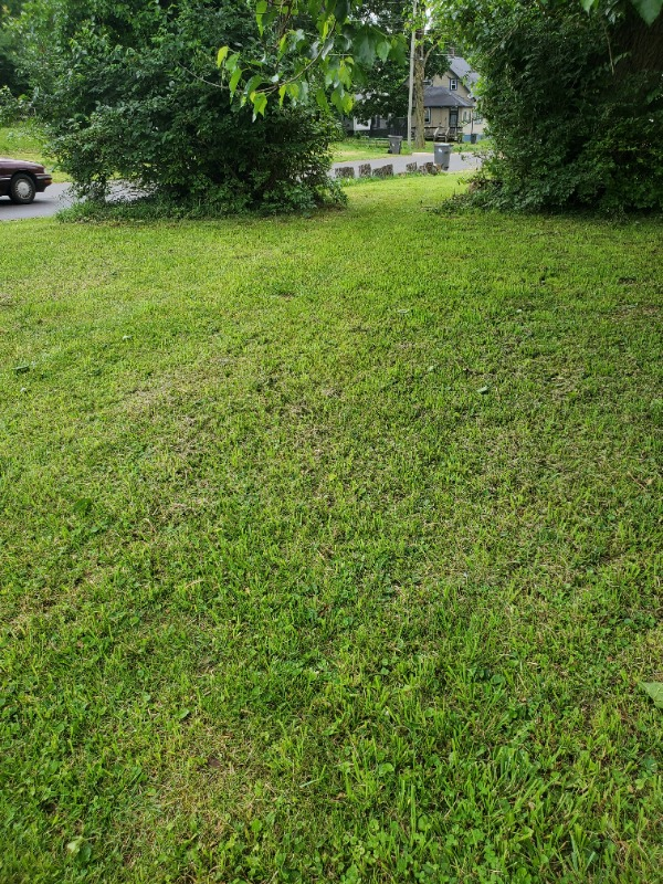 Yard mowing company in Indianapolis, IN, 46208