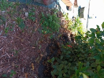 Yard mowing company in Clearwater, FL, 33756