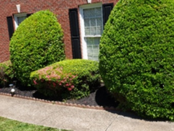 Yard mowing company in Jonesboro, GA, 30238
