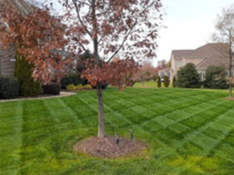 Yard mowing company in Indian Land, SC, 29707