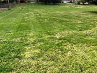 Yard mowing company in Adams, TN, 37040