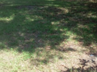 Lawn Care Service in St Petersburg, FL, 33701