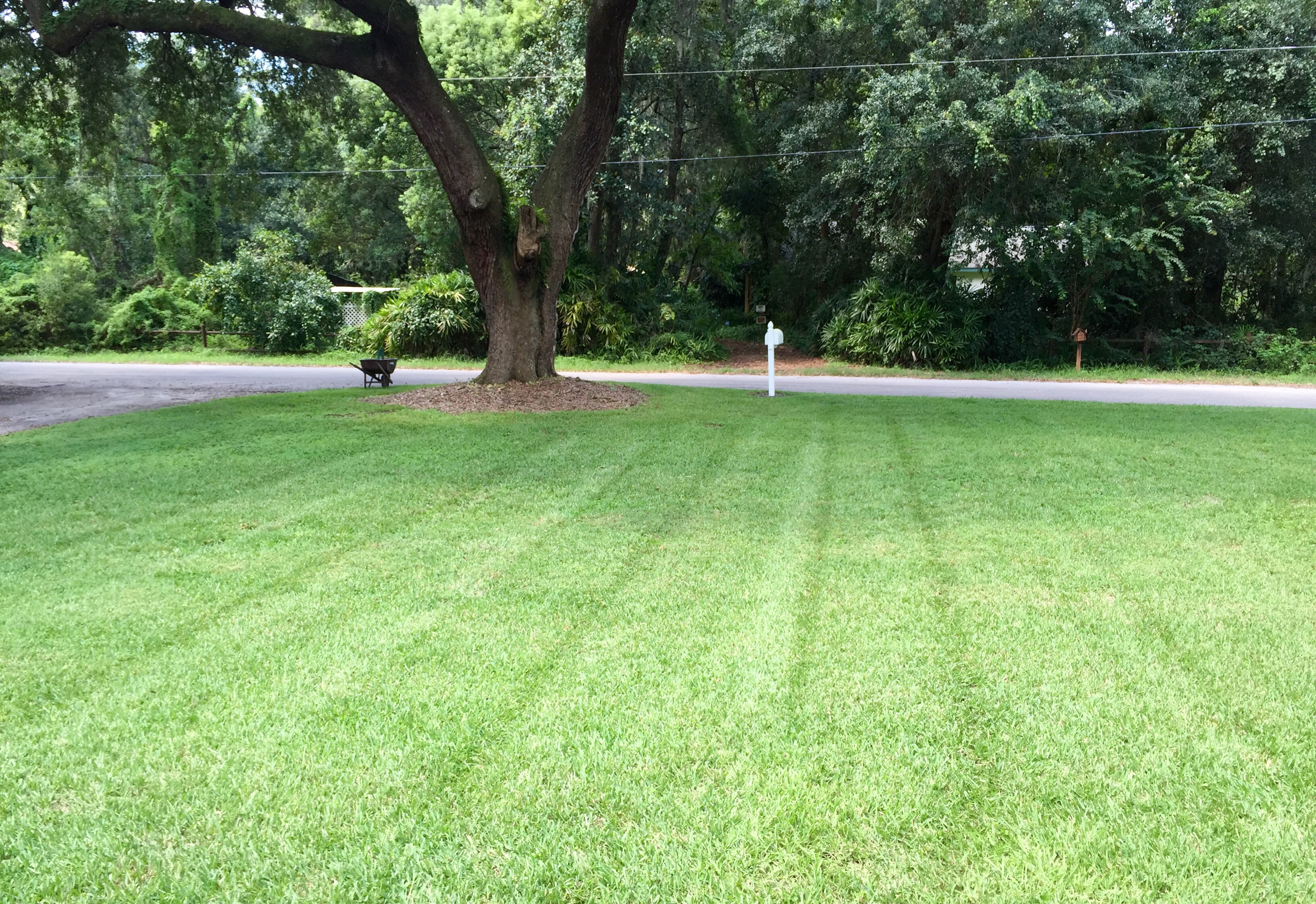 Lawn Care Service in Seffner, FL, 33584