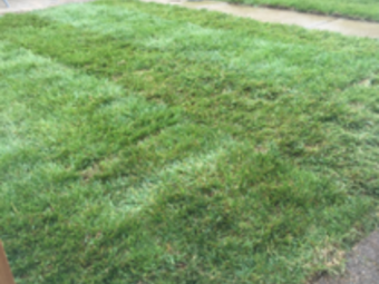 Lawn Care Service in St. Louis, MO, 63109