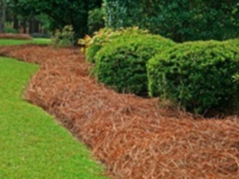 Lawn Care Service in Nashville, TN, 37214