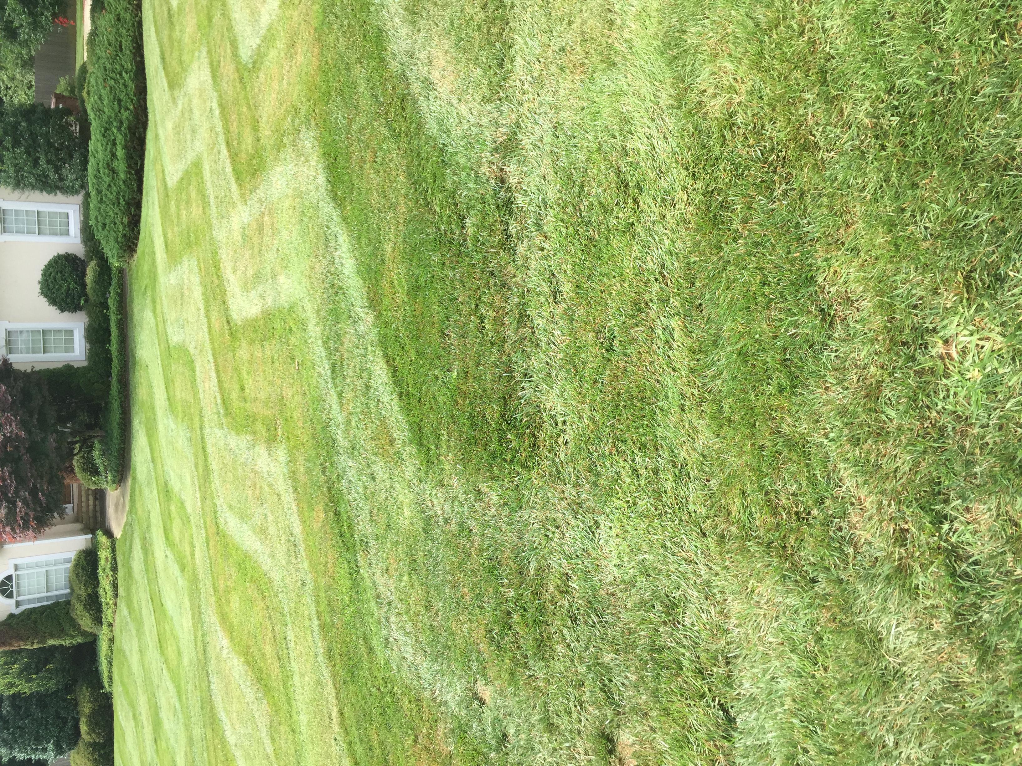 Lawn Care Service in Sophia, NC, 27350