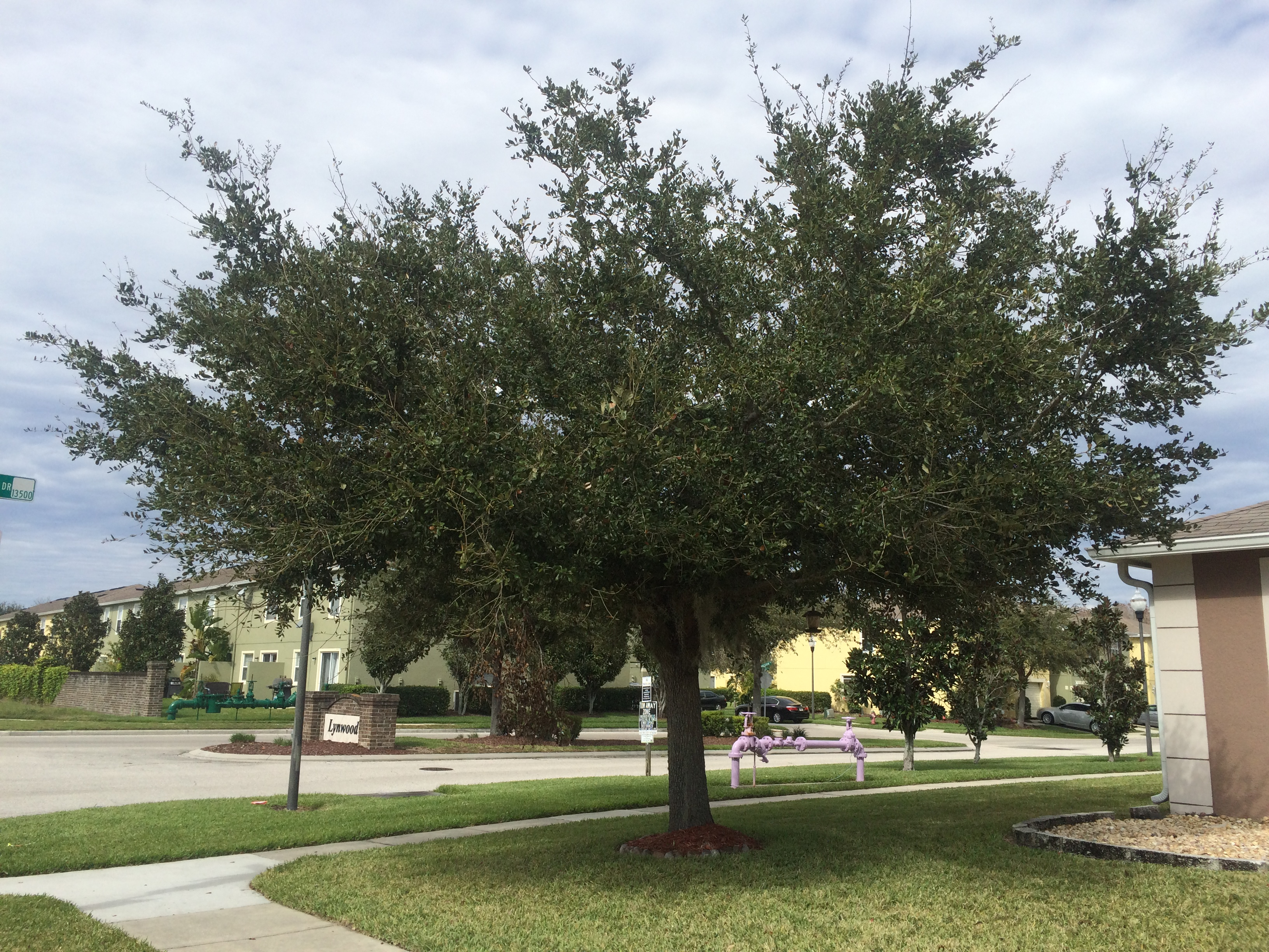 Lawn Care Service in Winter Garden, FL, 34787