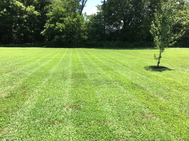 Lawn Care Service in Clarksville, TN, 37040